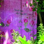 """Emsiana_2018_Jeannette_Frei  Die ihn Hohenems aufgewachsene Künstlerin Jeannette Frei thematisiert in ihrer Installation """"Noch sind die Tage der Rosen!"""" die Rose als Metapher.  Copyright: Emsiana/Thomas Dix. Abdruck honorarfrei zur Berichterstattung über die Emsiana. Angabe des Bildnachweises ist Voraussetzung."""
