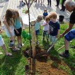 Familieplus-Sulzberg-Jahrgangsbaum-2018-2.jpg