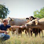 Rinder am Biobauernhof Hehle, Hörbranz