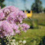 Niggbus: Wildblumen  Die Wildblumen am naturnahen Betriebsgelände von Niggbus erfreuen Mensch und Tier.  Copyright: Niggbus GmbH. Fotograf: Markus Gmeiner. Abdruck honorarfrei zur Berichterstattung über Niggbus. Angabe des Bildnachweises ist Voraussetzung.