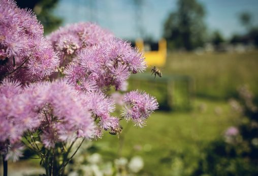 Niggbus: Wildblumen