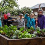 e5-Gemeinde-Krumbach  Wo das Gemüse herkommt, lernen Kinder der Volksschule Krumbach.  Copyright: Markus Gmeiner. Abdruck honorarfrei zur Berichterstattung über das e5-Programm für energieeffiziente Gemeinden. Angabe des Bildnachweises ist Voraussetzung.
