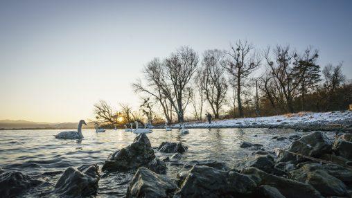 Vorarlberger Naturpicknick: Birdwatching am Bodensee