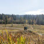 Vorarlberger Naturpicknick: Fohramoos  Das Fohramoos am Bödele ist Ziel eines Vorarlberger Naturpicknicks.  Copyright: Agnes Ammann/Vorarlberg Tourismus. Abdruck honorarfrei, Angabe des Bildnachweises ist Voraussetzung.