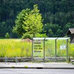 Bushaltestelle am Betriebsgelände von Niggbus  Rund um die Bushaltestelle Churer Straße am Betriebsgelände von Niggbus ist ein Naturparadies mit großer Wildblumen-Vielfalt entstanden.  Foto: Udo Mittelberger. Nutzung honorarfrei zur redaktionellen Berichterstattung über Niggbus. Angabe des Bildnachweises ist Voraussetzung.